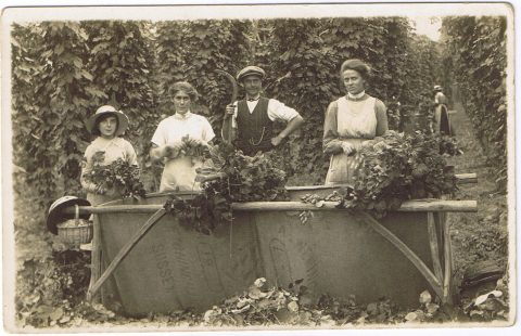 Hop picking, Burgham Farm 1923