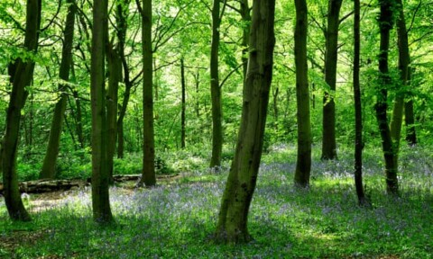 photo of trees and bluebells